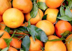 Close up of oranges