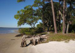 Shoreline in Tampa Bay, Florida